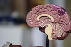 Venez à l'ICM et rencontrez les électrophysiologistes pendant la semaine du cerveau, 22 édition (annulée)