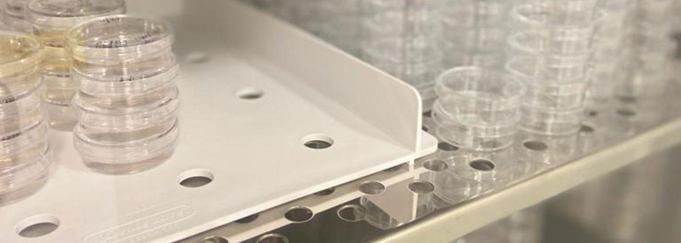 cell culture - celis